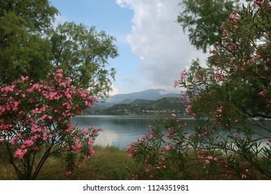 Sea view through oleander branches, Kefalonia - Greece
