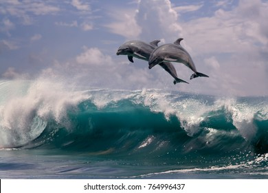 Sea water background. Two dolphins jumping from sea water over ocean wave