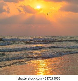 Sea waves and seagull flies against the background of setting sun
