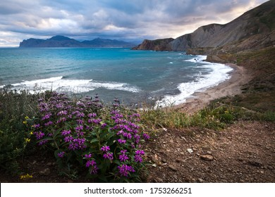 Sea with waves that break on the rocks. Sky covered with clouds, purple flowers in foreground