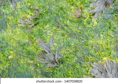 Sea weed Marine life, oceanic plants, sea colorful garden