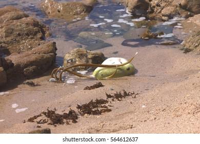 Sea weed in sea water on beach