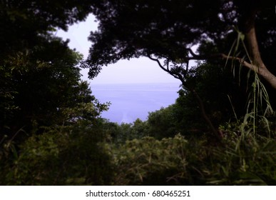 The sea which can be seen from the forest