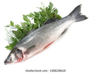 Sea Wolf - Fish