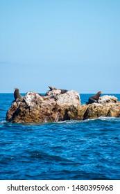 Sea Wolf Mammals Standing on Marietas Islands