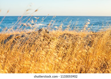 sea and yellow grass