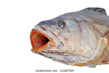 Seabass, Caranx sexfasciatus. Fish Isolated on the white background