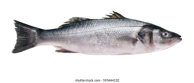 Seabass carcass isolated on white background