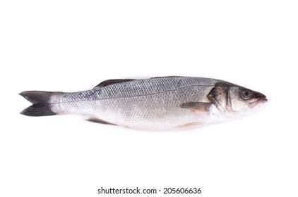 Seabass close up. Isolated on a white background.