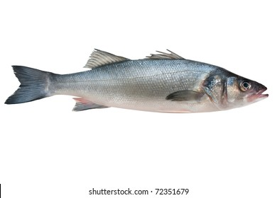 Seabass, Dicentrarchus labrax. Isolated on white background