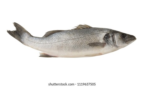 Seabass fish isolated on white, Dicentrarchus labrax.