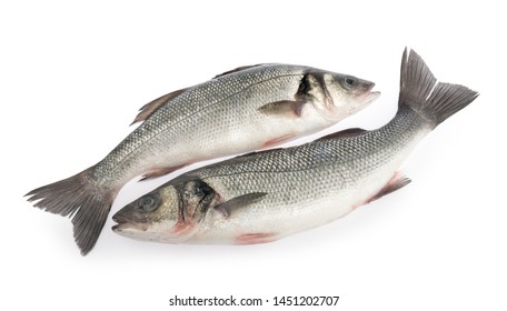 seabass fish isolated on white background