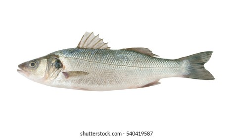 Seabass fish isolated on white background, Dicentrarchus labrax