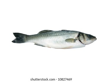 Sea-Bass isolated over white background