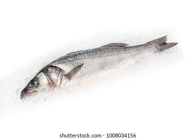 Seabass (labrax) on white background