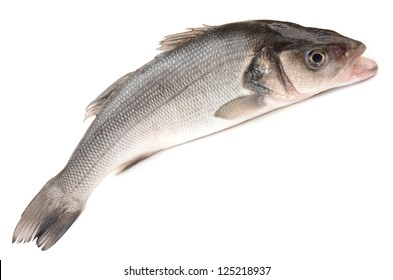 Seabass on a white background