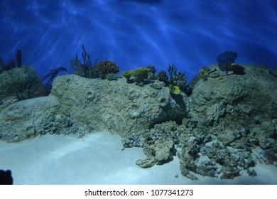 seabed in the aquarium