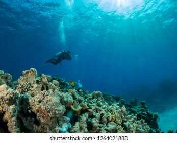 seabed with underwater life
