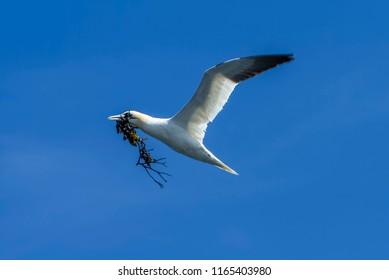 seabird flying in the sky