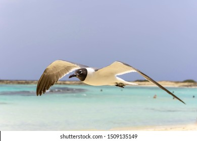Seabird flying in the wind on the beach