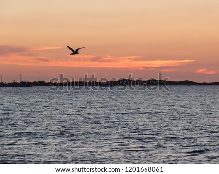 Seabird silhouette at Sunset Rockingham Beach Western Australia