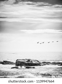 Seabirds and brown fur seals on island off the Cape of Good Hope, Cape Peninsula, South Africa in black and white