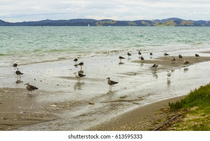 Seabirds at Omana Regional Park Auckland New Zealand