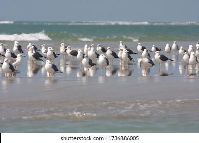 Seabirds on beach, Gulf of Mannar, Sri Lanka