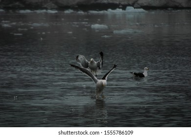 Seabirds on meltwaters in an Antarctic fjord