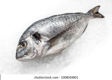 Seabream (dorado) on white background