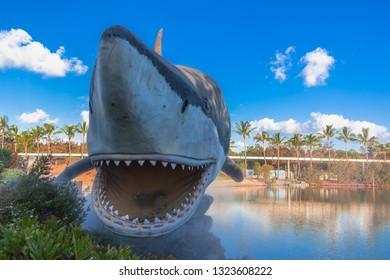 SEACREATURES, GOLD COAST, AUSTRALIA-12th JANUARY 2019:-Large sea creatures, on display at Seaworld on the gold coast.
