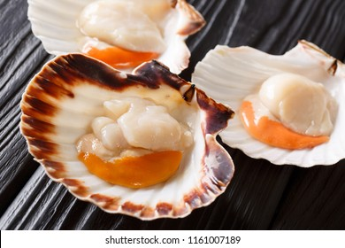Seafood background with fresh scallops in white and brown shells. Seafood delicacies. horizontal format