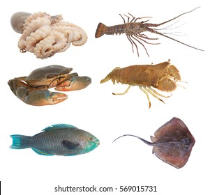 Seafood collection isolated on white background