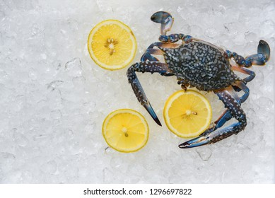 Seafood crab on ice background / Fresh Blue Swimming Crabs and lemon ocean gourmet on ice bucket in the supermarket