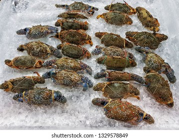 Seafood crab on ice background.Fresh Blue Crabs on ice bucket in the supermarket