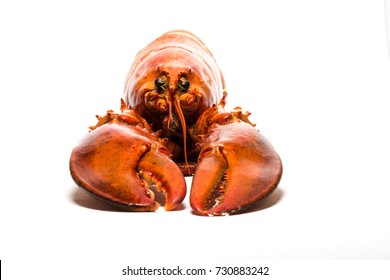 Seafood: Lobster