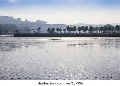 Seafront and urban park at misty dawn backlighting in El Burgo estuary, Culleredo town