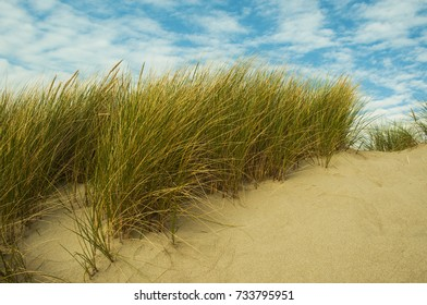 Seagrasses on a dune by the Pacific Ocean