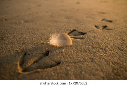 seagul Footprints with a fall fetaher