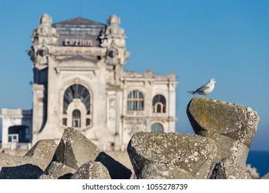 Seagul having Casino historical building of Constanta Romania in background