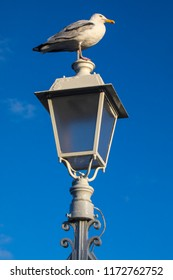 A seagul perched on one of the lamplights on the famous Ha'penny Bridge in the city of Dublin, Republic of Ireland.