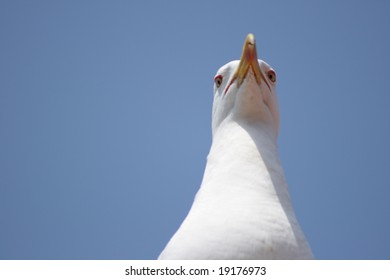 seagull from above