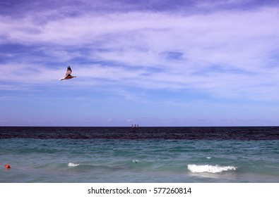 Seagull above the sea IDM