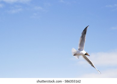 seagull against the background of blue sky