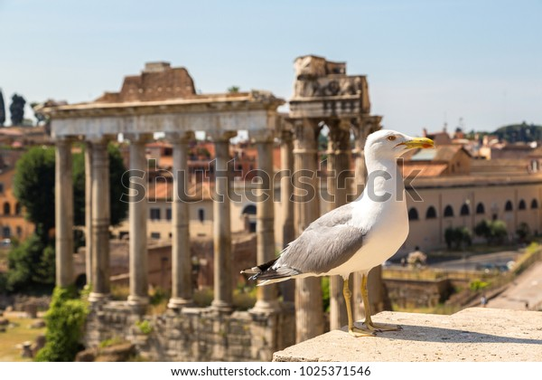 Seagull  and Ancient ruins of Forum  in a summer day in Rome, Italy