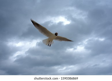 a seagull balances in the air in strong winds