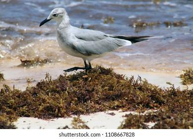Seagull in the beach