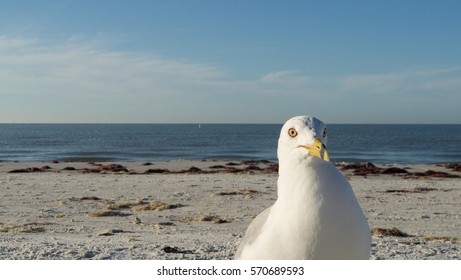 Seagull at beach looking at you
