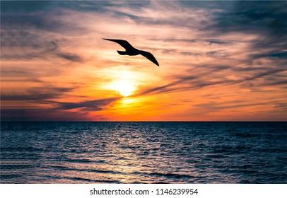 Seagull bird flight sunset water horizon