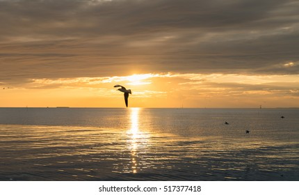 Seagull bird flying on sea at Bang pu, Samutprakan, Thailand. - Shutterstock ID 517377418